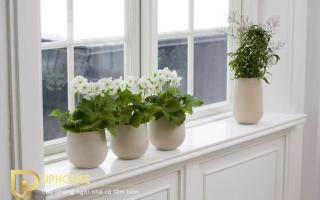 cách trang trí cây xanh trong nhà